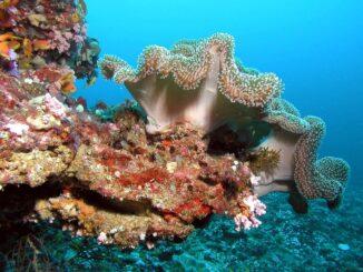 коралови рифове